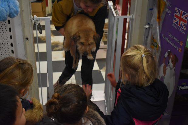 Peregrines pet shop