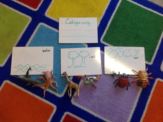 Categorising animals in Nursery