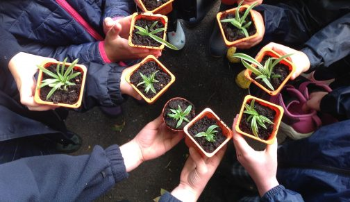 Forest School Plants
